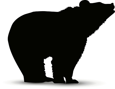 Silhouette of  bear.