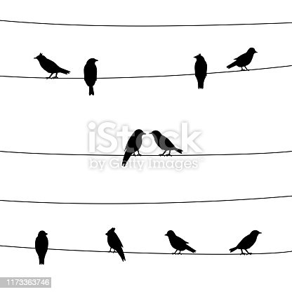 A silhouette of birds on wires.