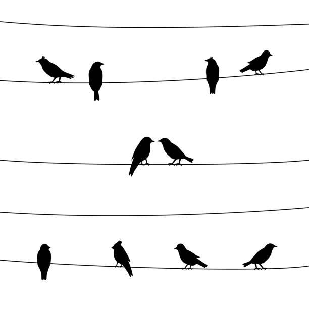 stockillustraties, clipart, cartoons en iconen met een silhouet van vogels op draden - neerstrijken
