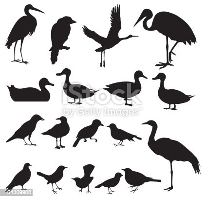 Multiple images of birds - Painted Stork, Oriental Pratincole, Crane, Intermediate Egret, Sparrow, Pigeon, Dove, Hawk, Crow, etc.
