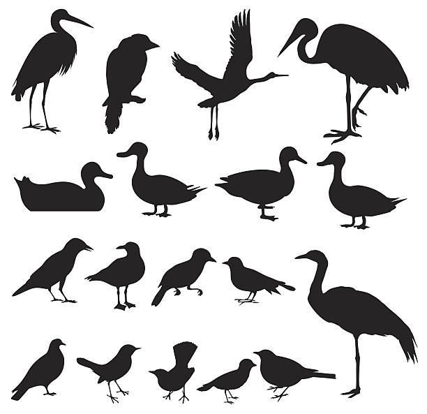 stockillustraties, clipart, cartoons en iconen met silhouette of birds (vector set#2) seamless background - roofdieren