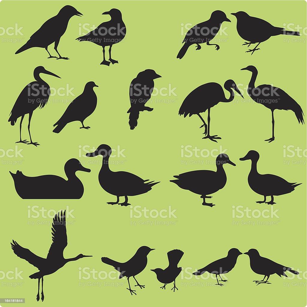 Silhouette of Birds (Set#1) seamless background: Vector Multiple images of birds - Painted Stork, Oriental Pratincole, Crane, Intermediate Egret, Sparrow, Pigeon, Dove, Hawk, Crow, etc. Animal stock vector