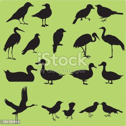 Multiple images of birds - Painted Stork, Oriental Pratincole, Crane, Intermediate Egret, Sparrow, Pigeon, Dove, Hawk, Crow, etc.