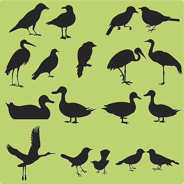 stockillustraties, clipart, cartoons en iconen met silhouette of birds (set#1) seamless background: vector - roofdieren