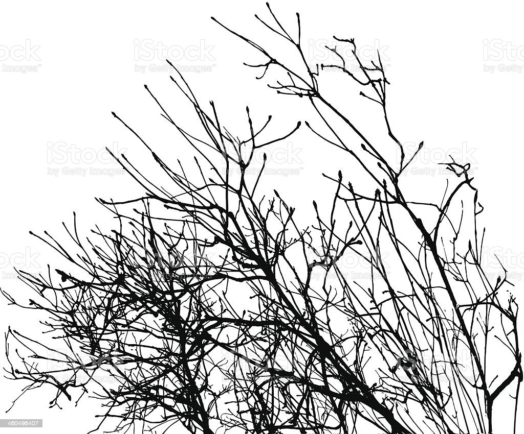 Silhouette Of Branches in Winter vector art illustration