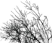 Silhouette Of Branches in Winter