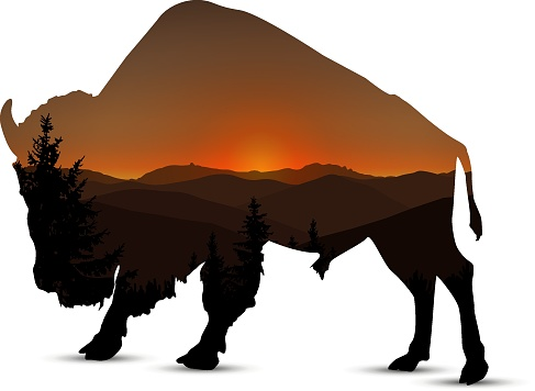Silhouette of buffalo