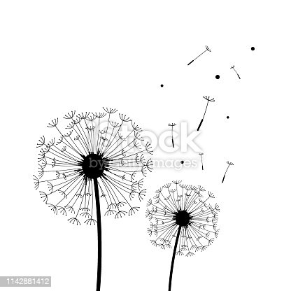 Vector of Silhouette of dandelion in black and white.