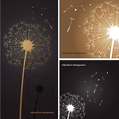 Vector of Silhouette of dandelion in gray and gold color background.