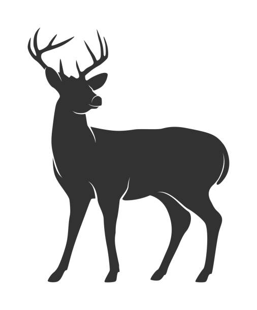 silhouette of deer with antlers on white background - deer antlers stock illustrations, clip art, cartoons, & icons