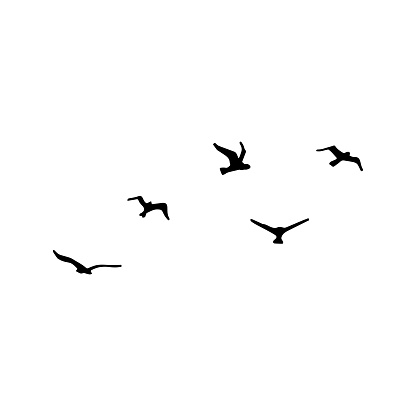 Silhouette of flying flock of cranes. Vector illustration on white background.