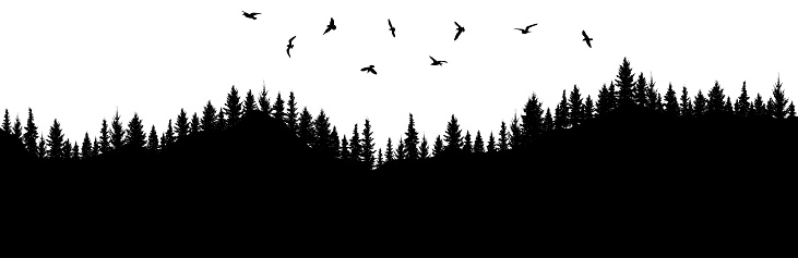Silhouette of forest and flying birds. Mountainous surface. Beautiful trees (spruce) are separated from each other. Vector illustration