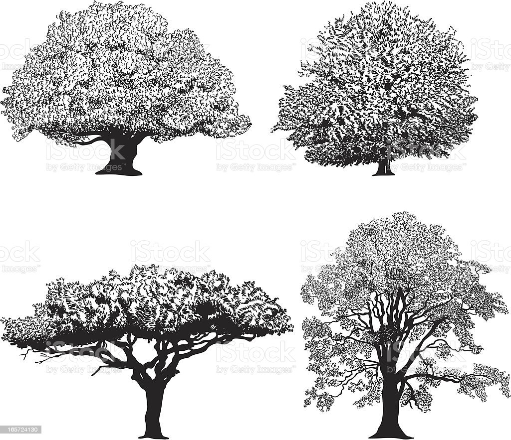 Silhouette of four different breeds of trees vector art illustration