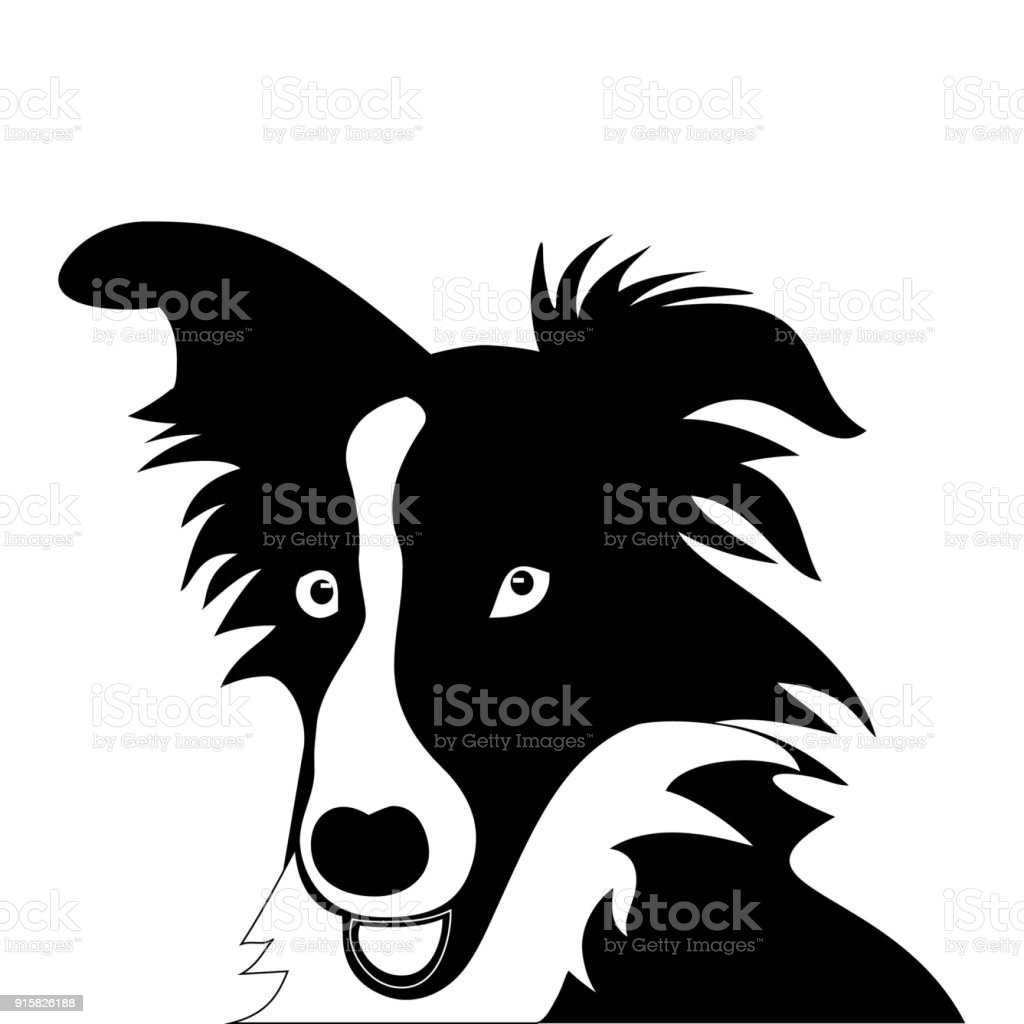 royalty free border collie clip art vector images illustrations rh istockphoto com border collie dog clipart border collie clipart black and white
