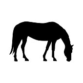 Silhouette of grazing horse. Vector illustration isolated on white background