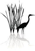 Vector silhouette illustration of a Great Blue Heron and Cat Tails.