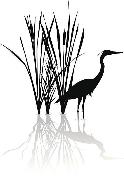 Silhouette of great blue heron with reflections Vector silhouette illustration of a Great Blue Heron and Cat Tails. heron stock illustrations
