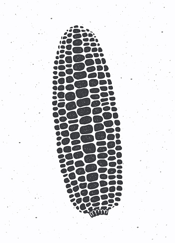 Silhouette of maize or corn cob without leaves. Vector illustration. Vegetable menu ingredient. Healthy vegetarian food.
