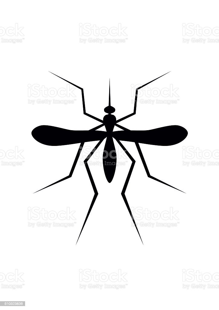 Silhouette of Mosquito. Insect, Culex pipiens isolated on white background. vector art illustration