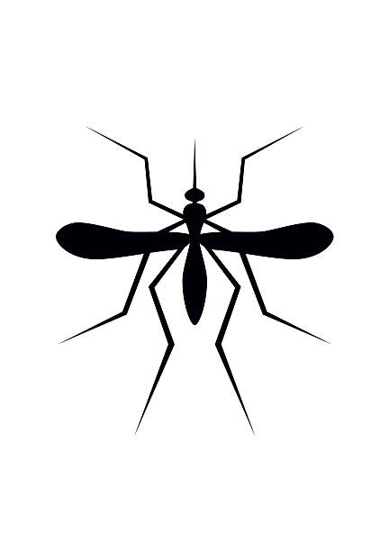 Best Mosquito Illustrations Royalty Free Vector Graphics