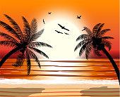 Silhouette of palm tree on beach.