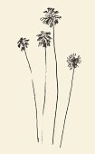 Silhouette of palm trees drawn vector sketch.