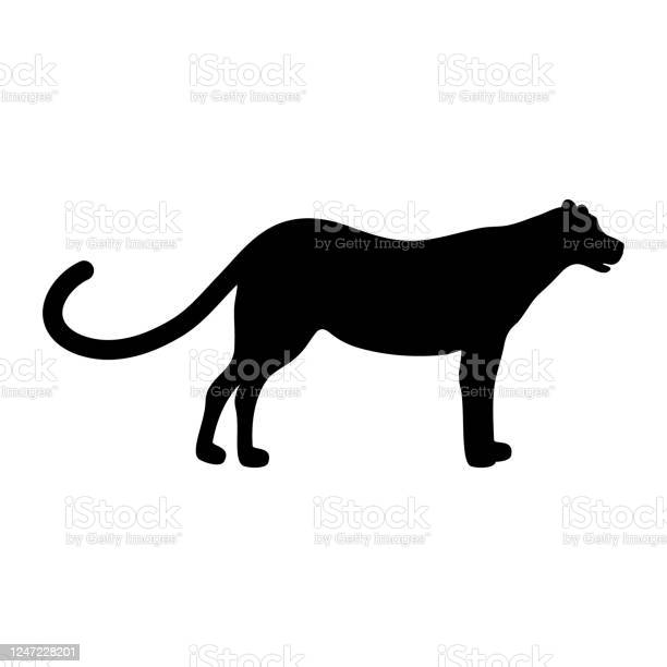 Silhouette Of Panther Lion Jaguar Puma Leopard And Tiger Stock ...