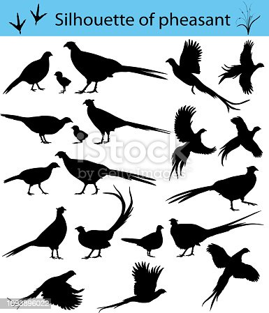 Collection of silhouettes of common pheasants