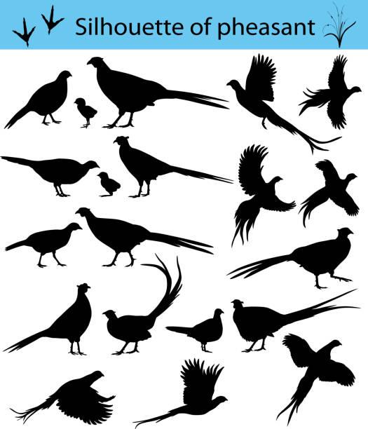 stockillustraties, clipart, cartoons en iconen met silhouet van fazant - ornithologie
