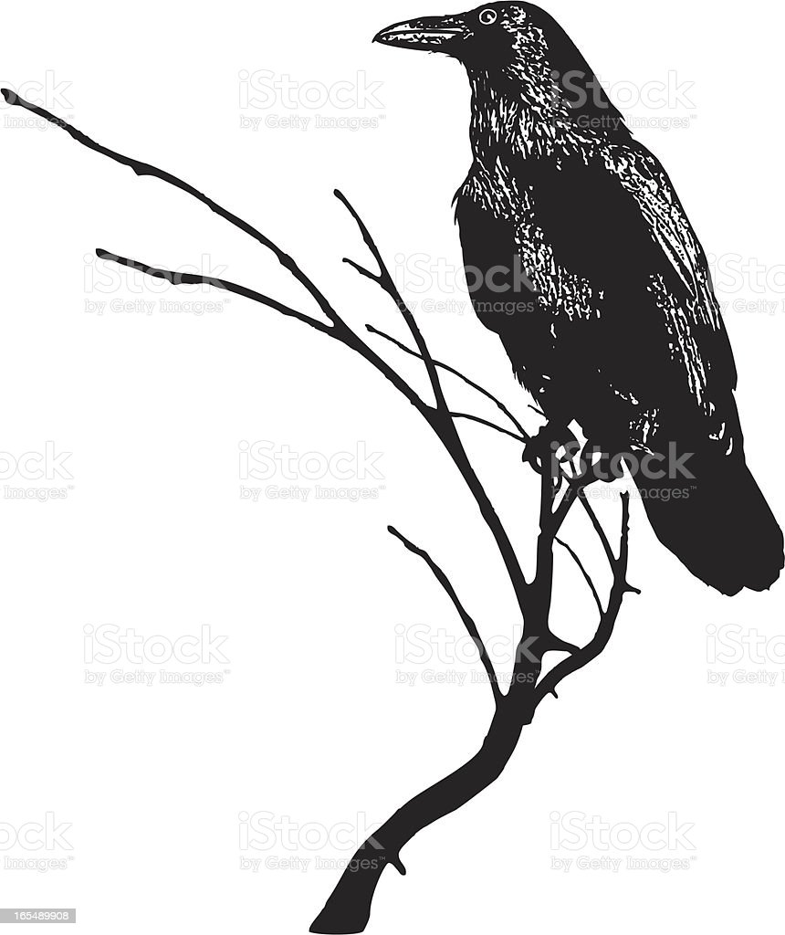 Silhouette of Raven on a Branch vector art illustration