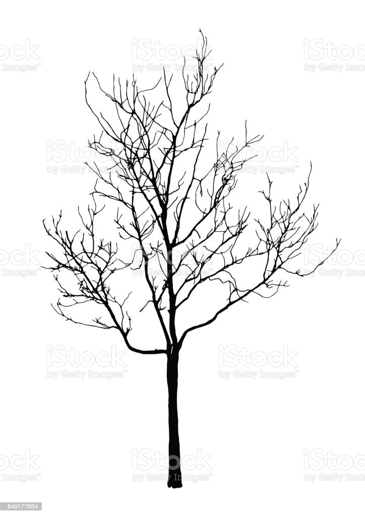 silhouette of realistic dead tree for halloween decoration, isolated nature illustration, vector sign