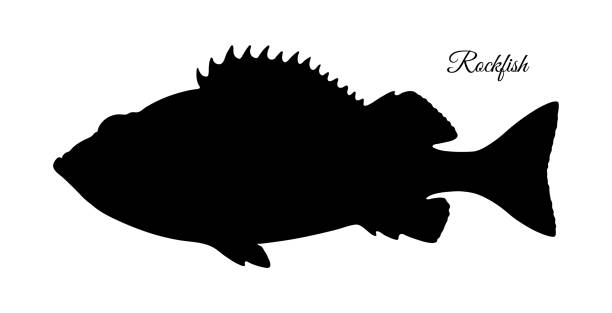 silhouette of rockfish. - redfish stock illustrations, clip art, cartoons, & icons