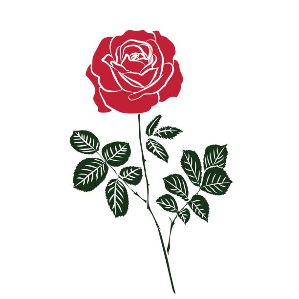 Red Roses Illustrations, Royalty-Free Vector Graphics & Clip Art - iStock