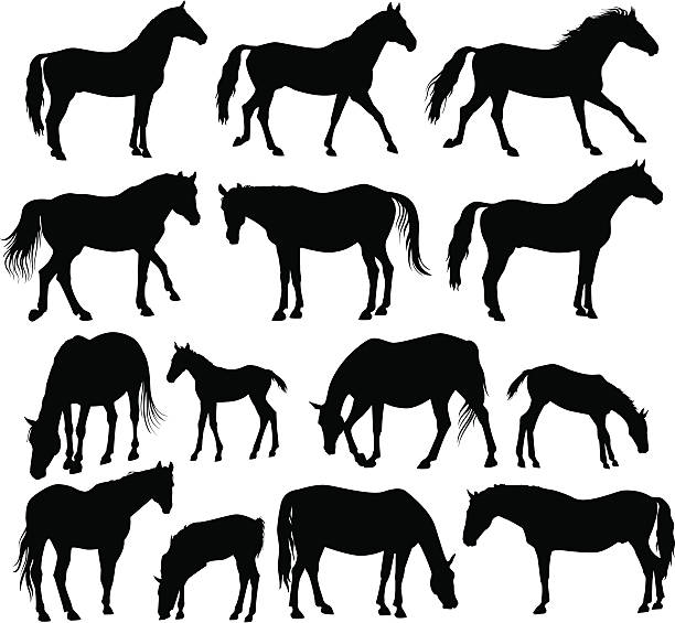 Best Baby Horse Illustrations, Royalty-Free Vector Graphics