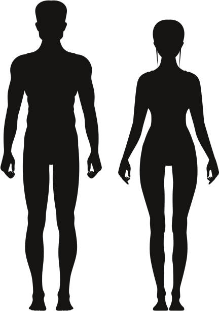 illustrations, cliparts, dessins animés et icônes de silhouette de sportif mâle et femelle debout vue de face. modèles d'anatomie en vecteur - partie du corps d'un animal