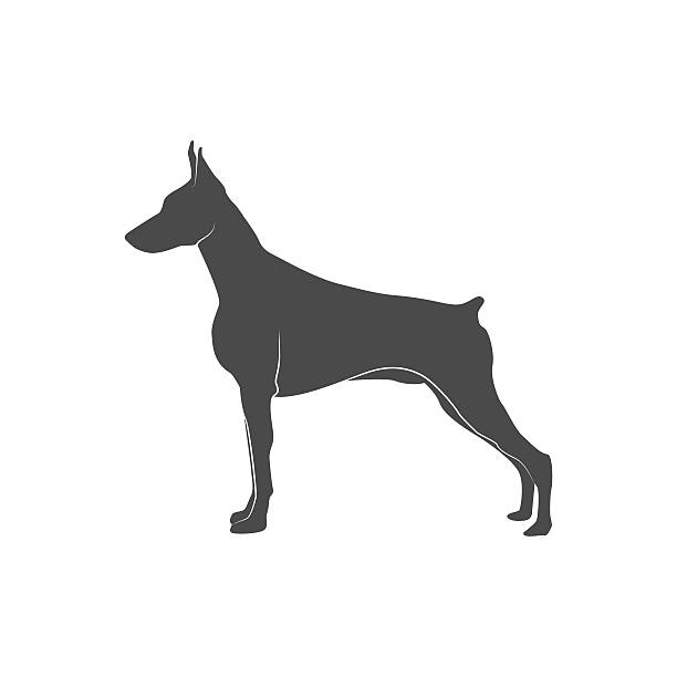 silhouette of the dog doberman vector art illustration