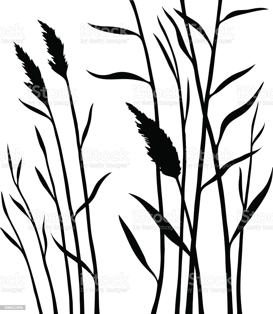 Silhouette of the reed isolated on white background vector art illustration