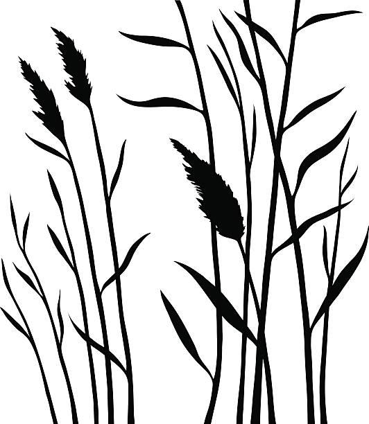 ilustraciones, imágenes clip art, dibujos animados e iconos de stock de silhouette of the reed isolated on white background - straw field