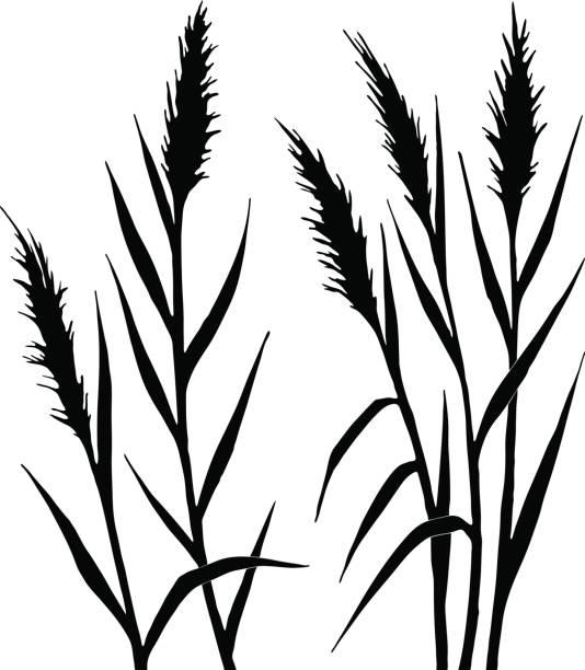 ilustraciones, imágenes clip art, dibujos animados e iconos de stock de silueta de la caña - straw field