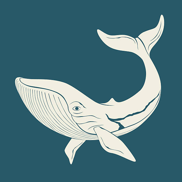 Royalty Free Humpback Whale Clip Art, Vector Images ...