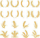 Silhouette of wheat. Corn vector symbols isolated on white
