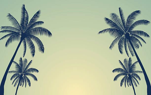 ilustrações, clipart, desenhos animados e ícones de silhouette palm tree in flat icon design with vintage filter - coqueiro