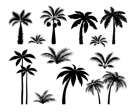 Silhouette palm trees. Set tropical black jungle plants. Black leaves and coconut jungle tree