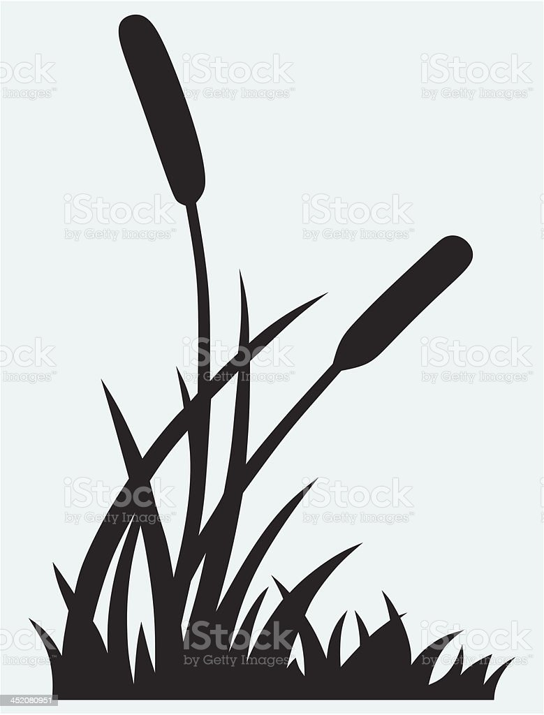 royalty free cattail clip art vector images illustrations istock rh istockphoto com