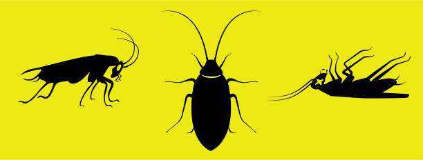 silhouette roaches side top side dead views black on yellow - bugs stock illustrations, clip art, cartoons, & icons