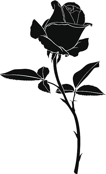 Silhouette rose flower Silhouette image beautiful rose flower sharp stock illustrations
