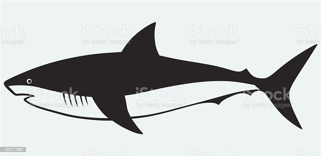 Silhouette Shark Stock Illustration Download Image Now Istock Solid color outlines of the body of the predator. https www istockphoto com vector silhouette shark gm452111587 25168392