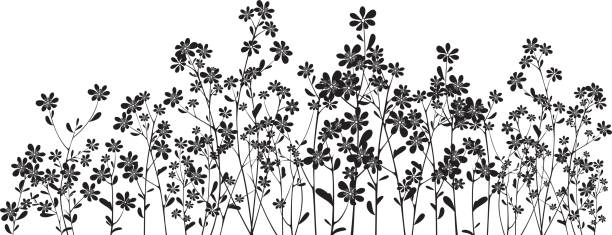 silhouette wildflowers on white - wildflowers stock illustrations, clip art, cartoons, & icons