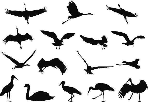 silhouettes - birds - crane bird stock illustrations