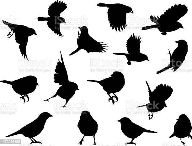 Silhouettes birds vector id472296155?b=1&k=6&m=472296155&s=612x612&h=bdhirgafdo3rm20xyxs4ftzdehuzsywvzg8hminow40=